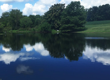 Midnight Blue natural looking pond dye. 1 quart treats 1 acre, 6 feet deep