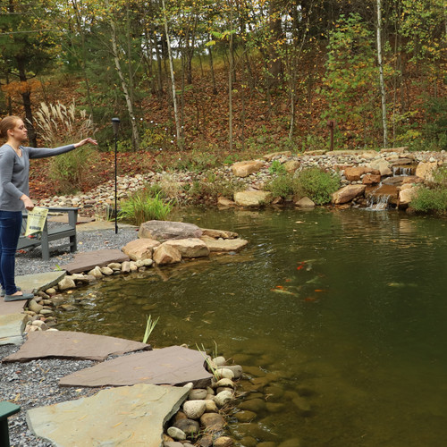 Digest Fish waste with Natural Bacteria