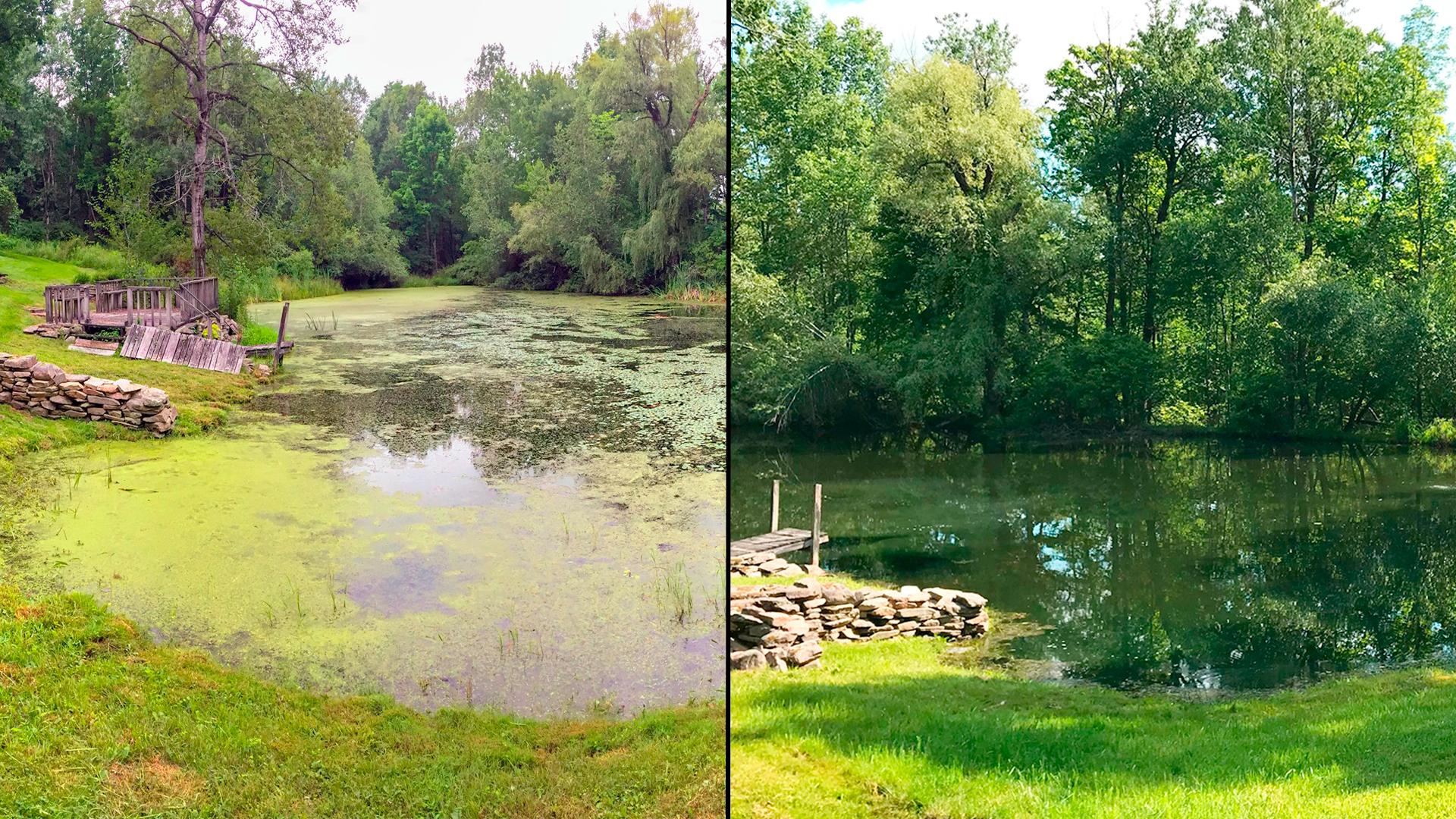 This pond in Pennsylvania was covered in algae blooms and duckweed. After treating with Natural Waterscapes' products, this pond has been brought back to its glory.