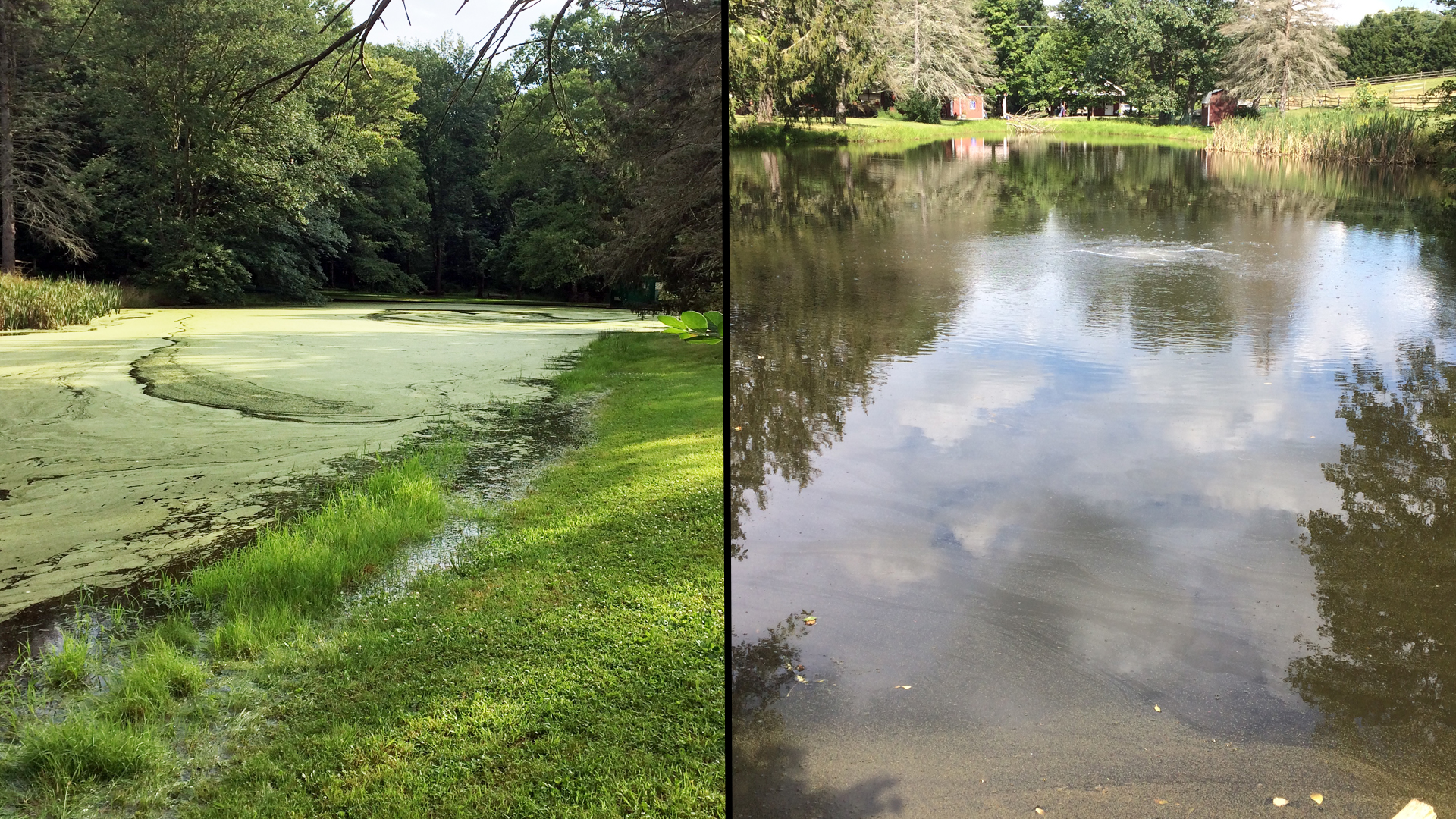 This pond in PA used our Duckweed Destroyer Pack to tackle duckweed on their pond.