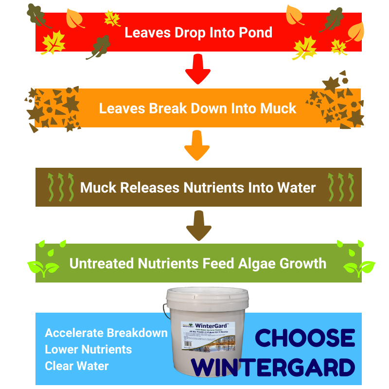 WinterGard Cold Water Bacteria for Ponds