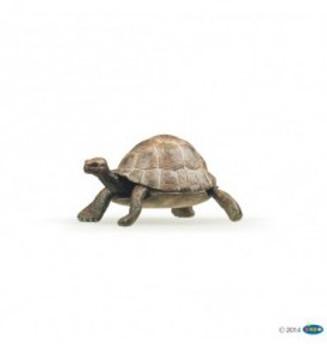tortoisePapo