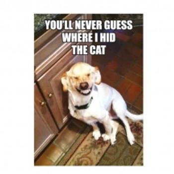 hidethe cat magnet