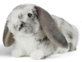 Living Nature Dutch Lop Eared Rabbit