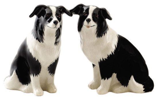 Border Collie Salt and Pepper