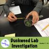 Duckweed Inquiry Lab