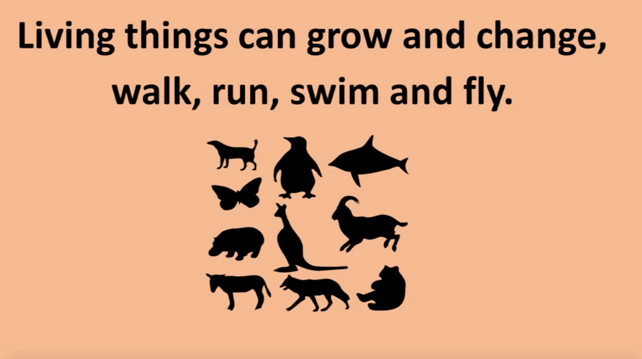 'LIVING THINGS' (Grades Pre-K - 3) ~ Curriculum Song Video