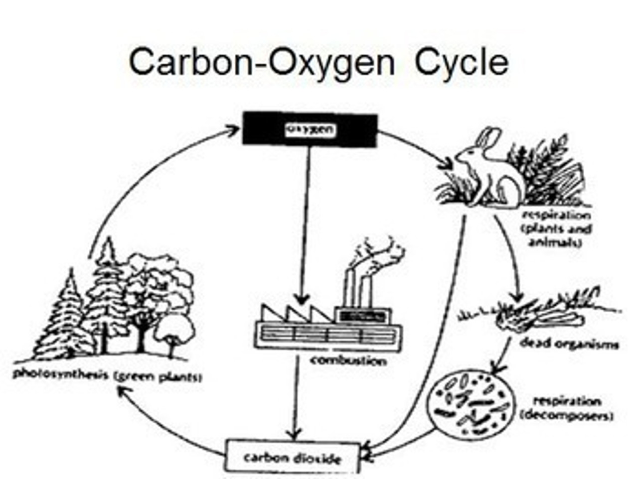 Ecology Learning Activities (Distance Learning)
