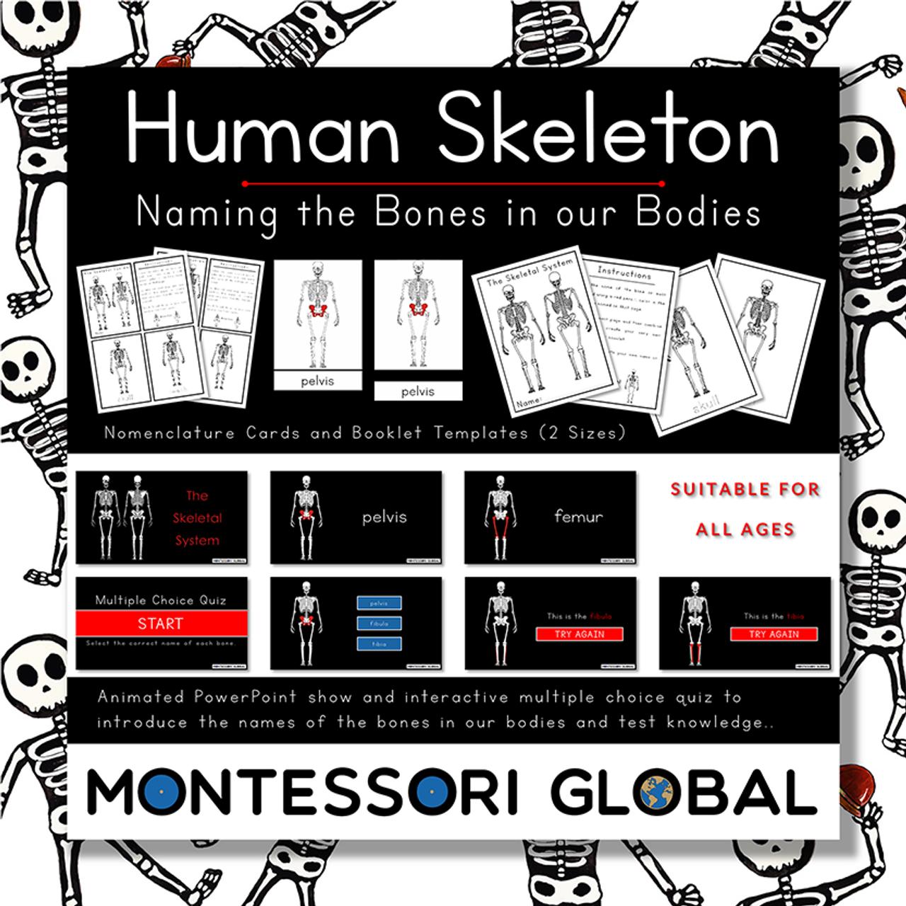Skeletal System Powerpoint Interactive Quiz Nomenclature Cards Templates