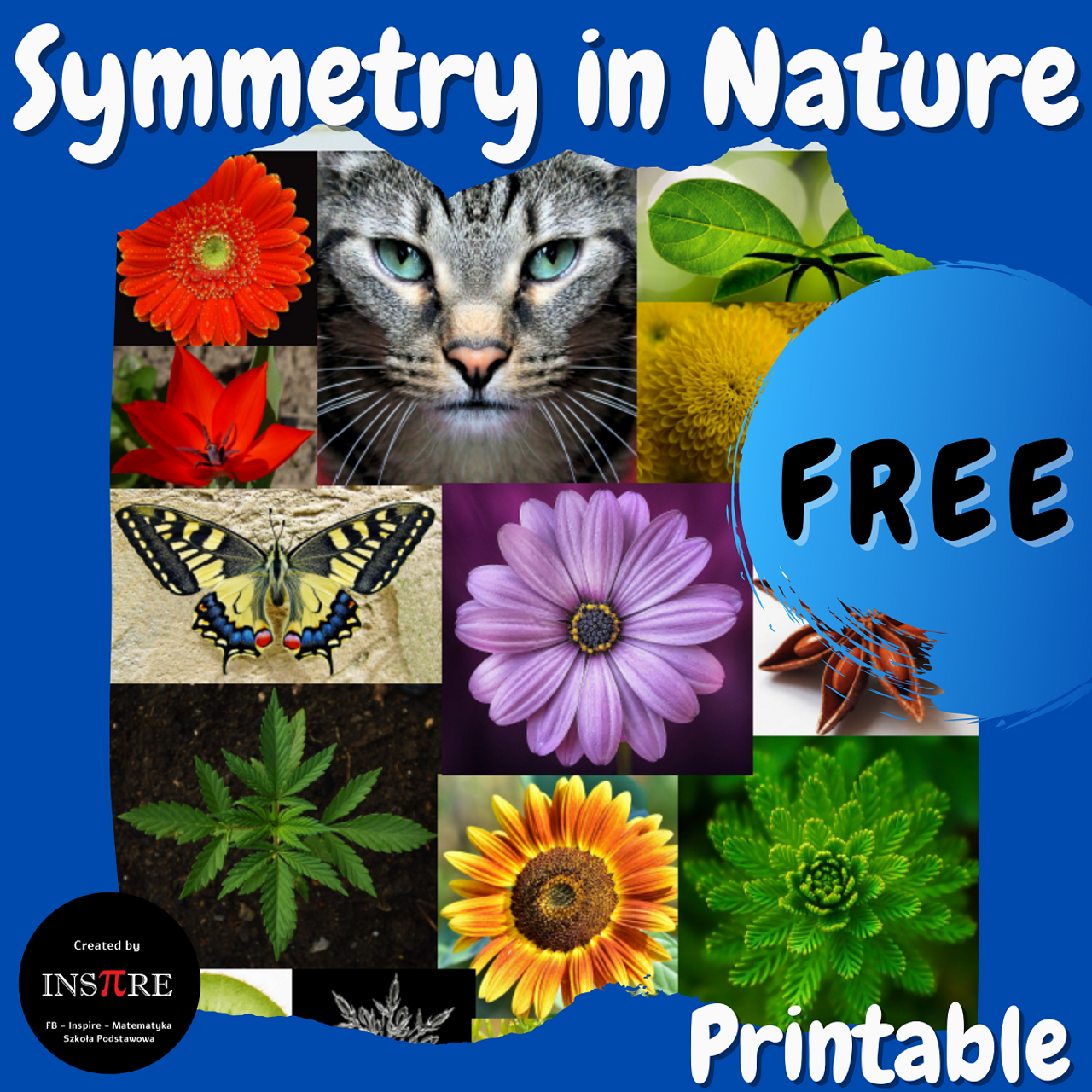 FREE Symmetry in Nature Math Poster Bulletin Board Anchor Chart Printable PDF