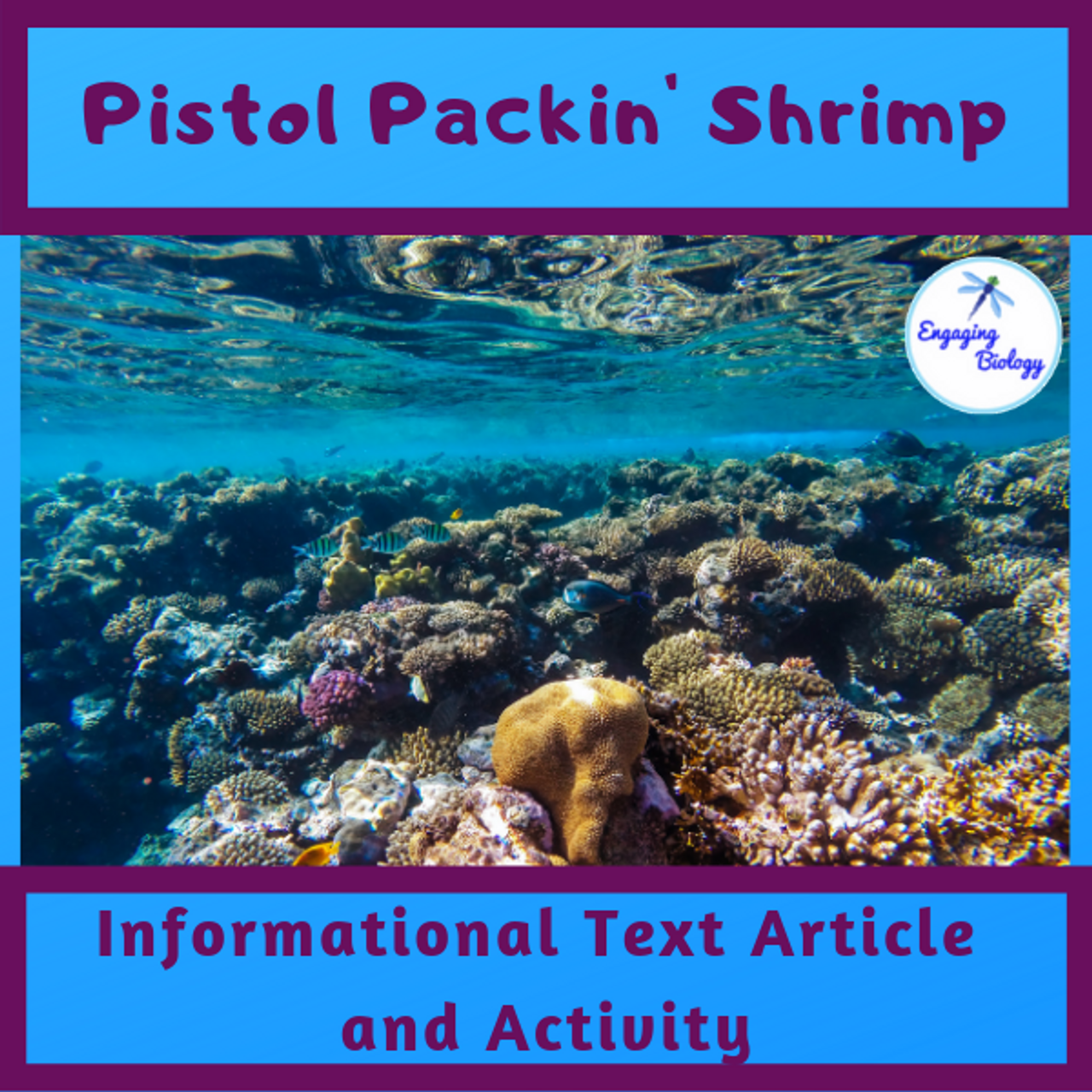 Pistol Packin' Shrimp Information Text and Activity