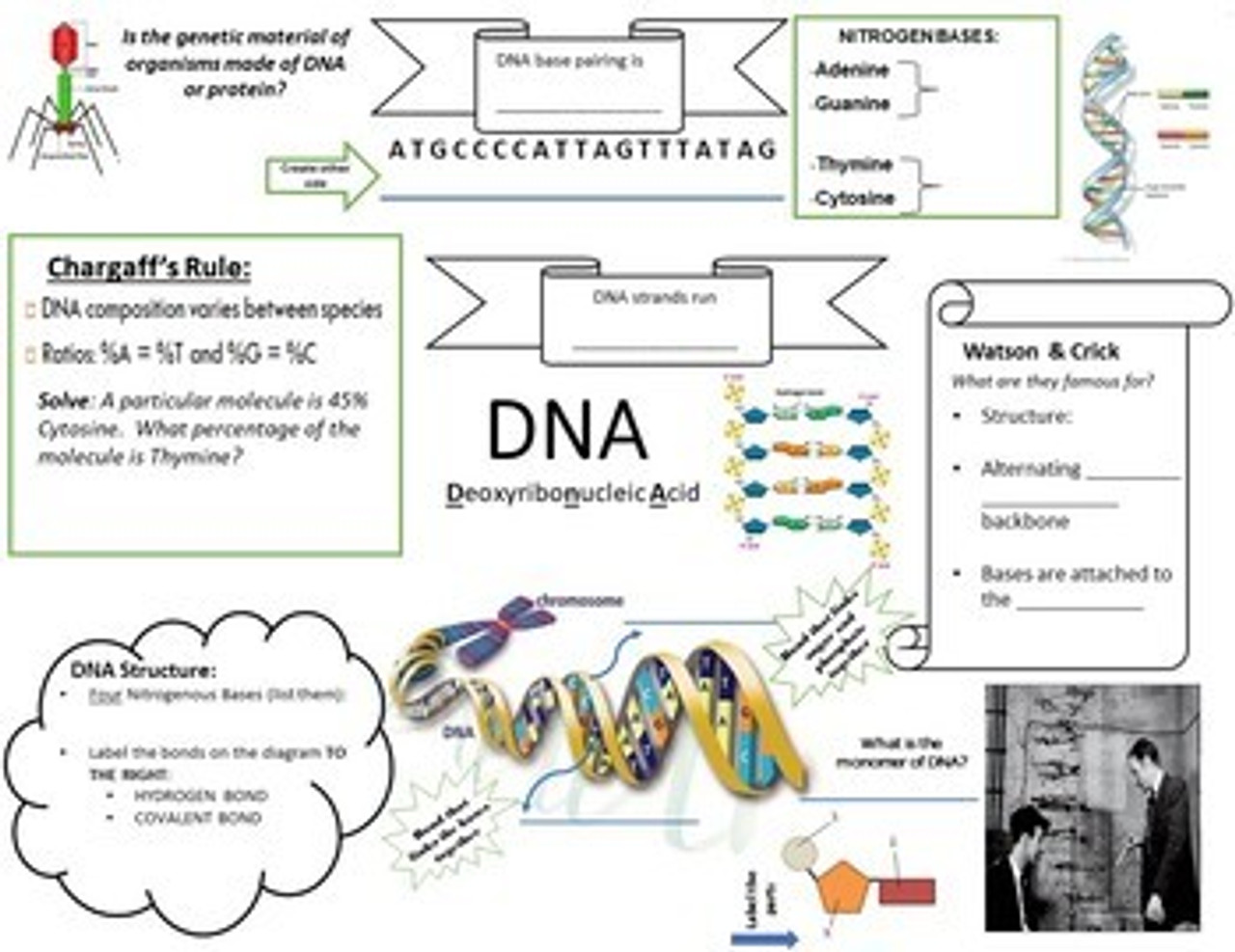 DNA Structure Interactive Doodle Handout