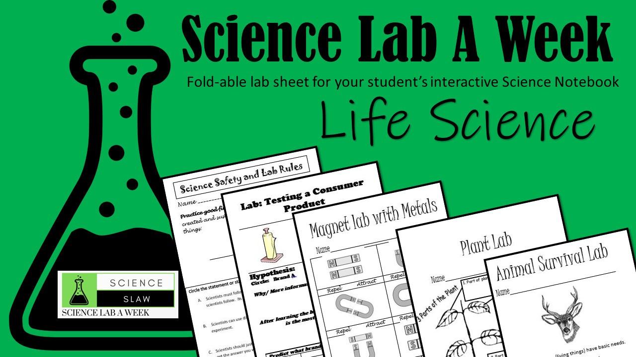 Food Chain Science Lab