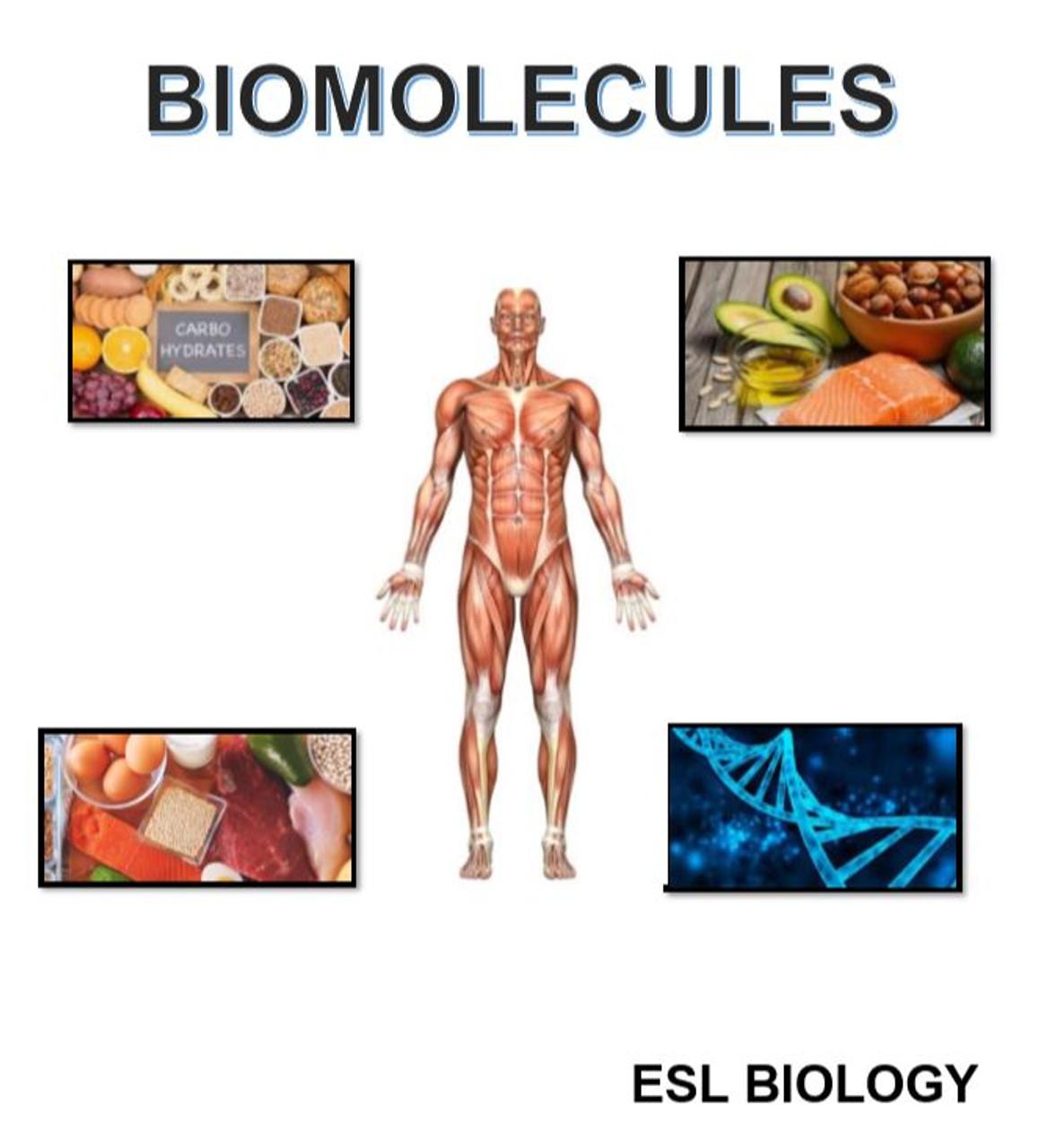 BIOMOLECULES ESL Biology