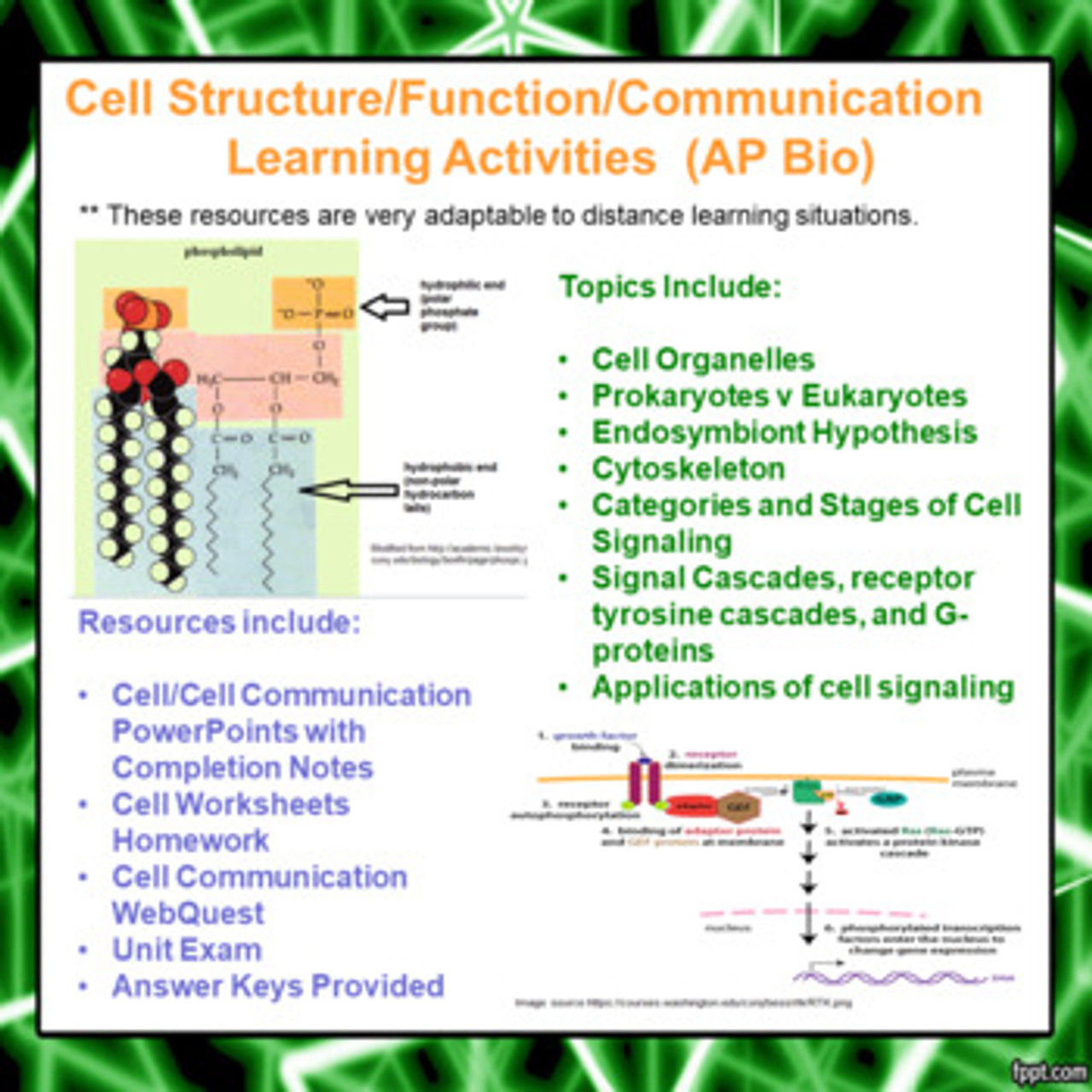 Cell Structure/Function/Communication Activities for AP Biology (Distance Learning)
