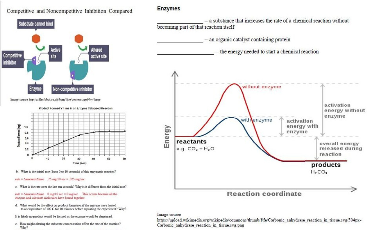 Enzyme Learning Activities for AP Biology (Distance Learning)