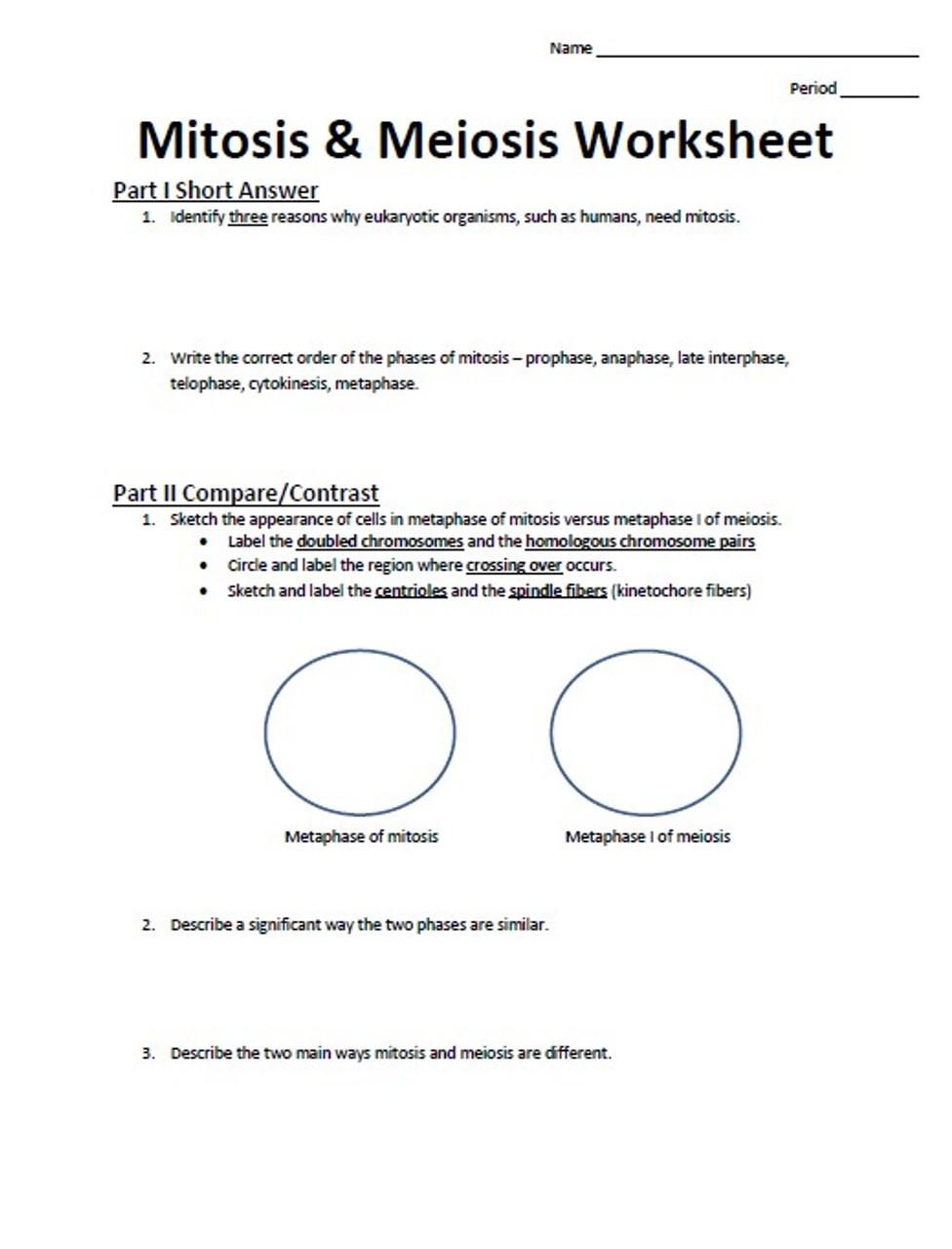 Mitosis & Meiosis Worksheet