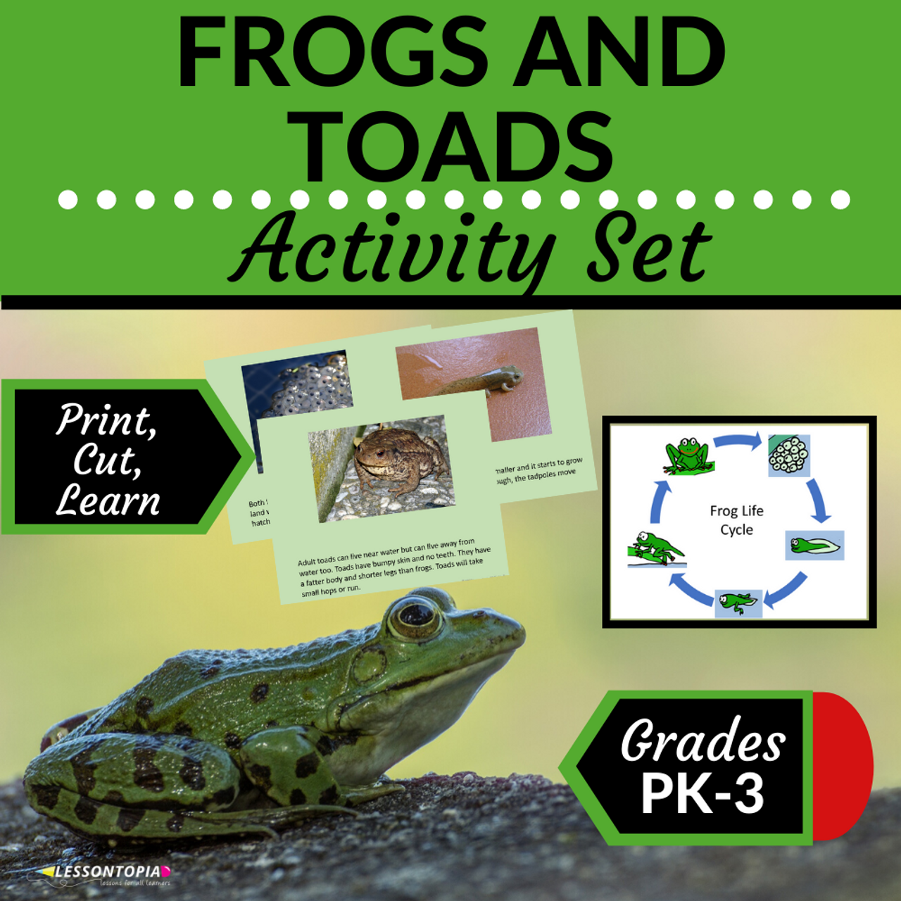 Frog and Toad Activities
