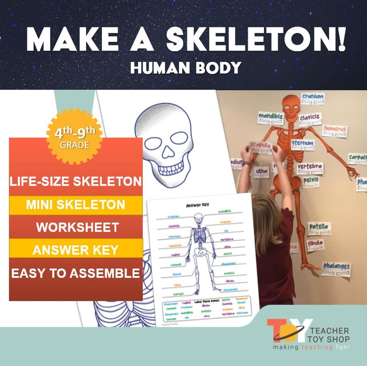 Make A Skeleton!