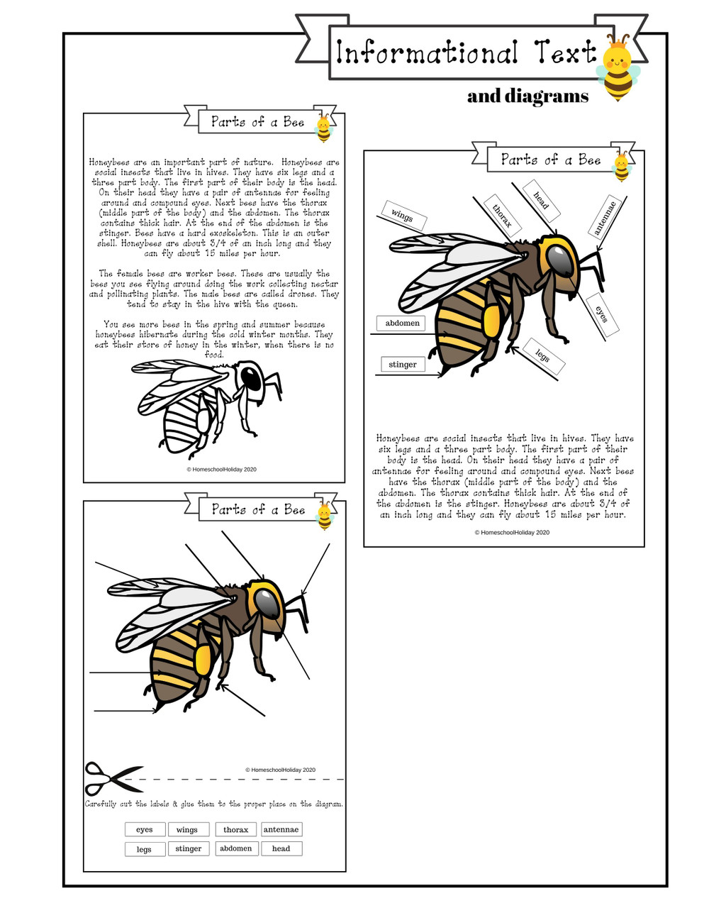 samples of Informational Text passage and diagram activity