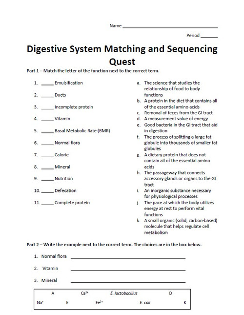 Digestive System Matching and Sequencing Quest
