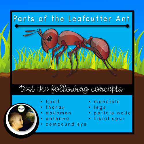 Parts of the Ant and Lifecycle  Montessori Cards and Boom Cards™