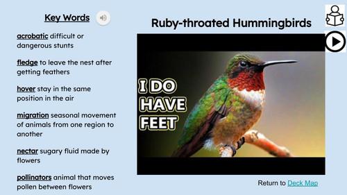 Birds Informational Text Reading Passage and Activities BUNDLE