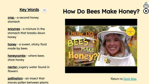 Bees Informational Text Reading Passage and Activities