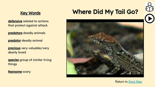 FREE   Lizards Informational Text Reading Passage and Activities
