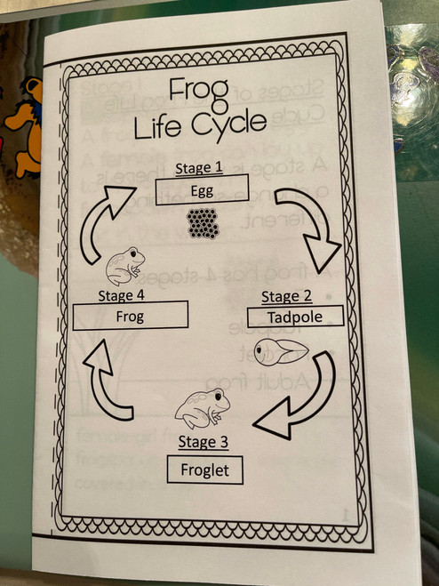 Frog Life Cycle Booklet