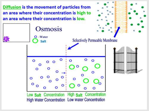 Osmosis in Elodea Cells