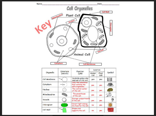 Cell Organelles (Basic)