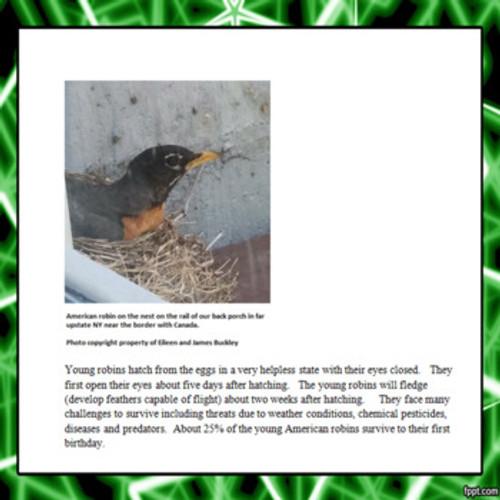 Reproduction and Development Adaptations in the American Robin Learning Activity