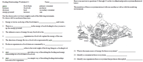 Feeding Relationships Worksheets Review