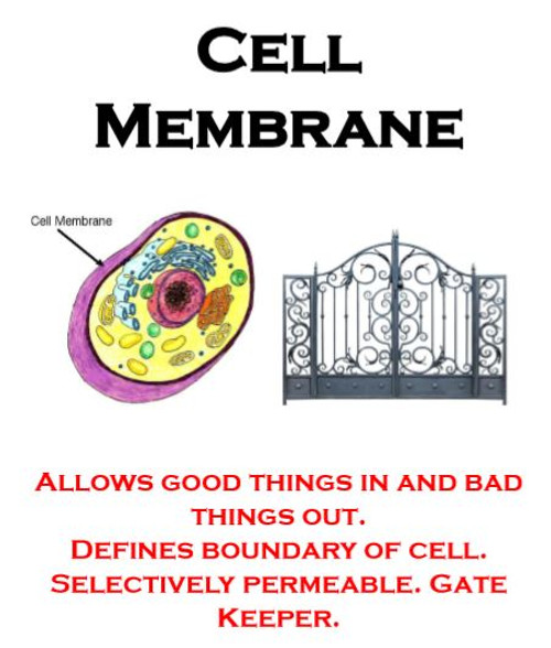 The Cell as a Stage: Organelles