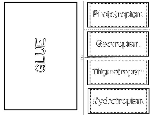 Plants Response to Stimuli Interactive Notebook / Foldable
