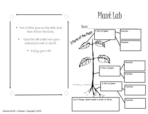 Photosynthesis and Plant lab