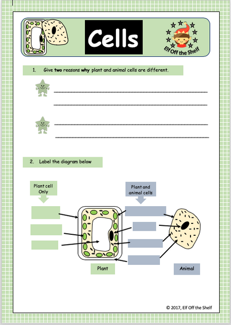Plant and Animal Cells - Structure and Differences - Free Worksheet
