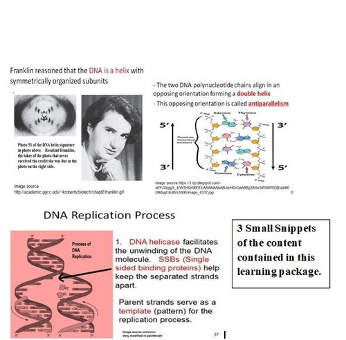 DNA Structure and Replication Learning Activities for AP Biology (Distance Learning)