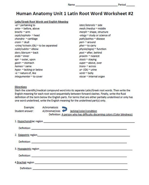 Latin Root Word Worksheet Set For Unit One Human Anatomy Physiology