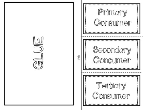 Consumers (Primary, Secondary, and Tertiary) - Interactive Notebook