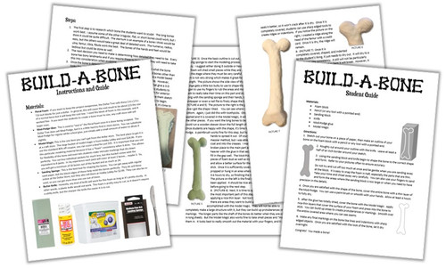 Build-a-Bone! Great Activity for Hands-On Learning and the Skeletal System!