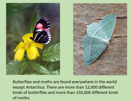 Butterfly and Moth Activities