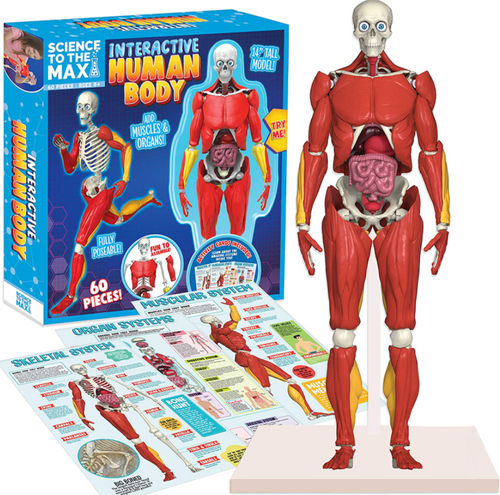 Interactive human body science toy, contents shown with box