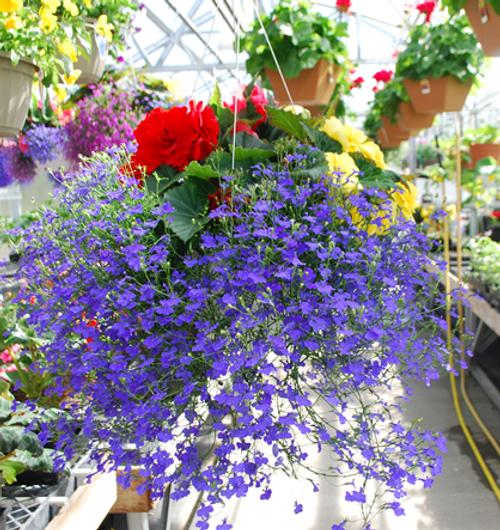 NonStop Begonia Mix Hanging Basket