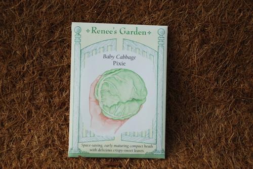 Cabbage Baby Pixie
