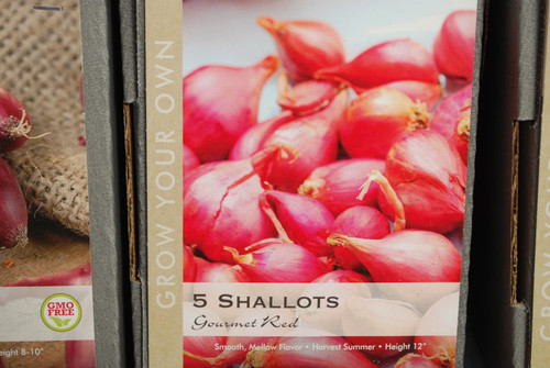 Shallots Red Gourmet