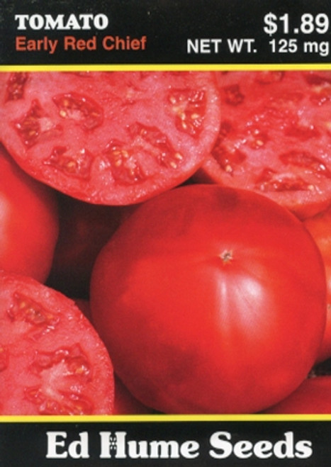 Early Red Chief Tomato