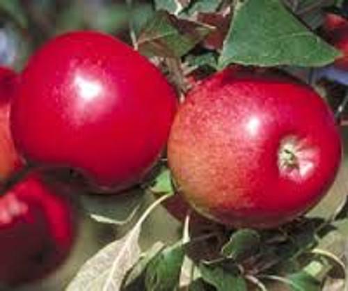 Apple State Fair
