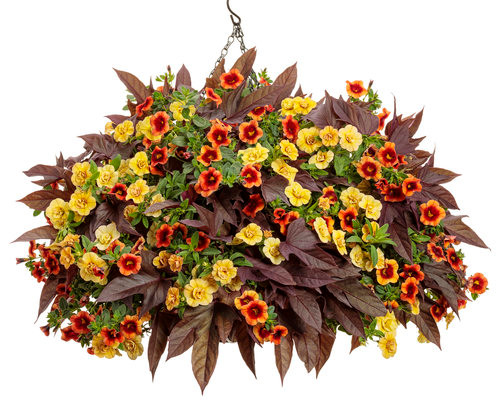 Tour of Tuscany Combo Hanging Basket **MOTHER'S DAY RELEASE**